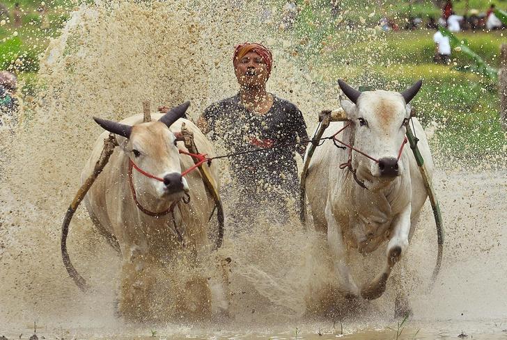 Фото №1 - Один кадр: Индонезия
