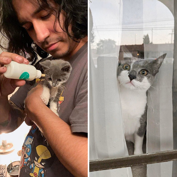 Фото №1 - Дом меняет все: 35 фото котиков до и после усыновления