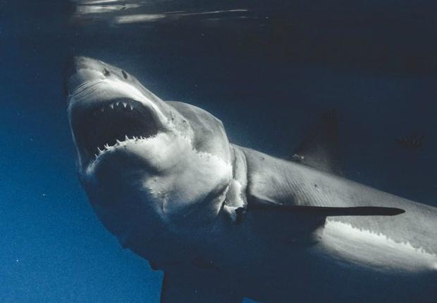 Фото №1 - Галерея: у фотографа хобби снимать акул с такого близкого расстояния, что можно заглянуть им в душу