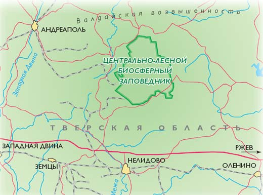 Фото №6 - Еловая губерния