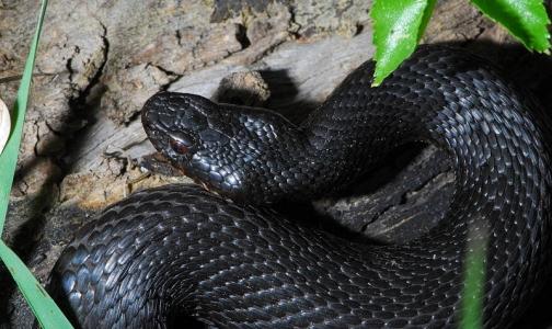 Фото №1 - В июне змеи укусили двух петербуржцев