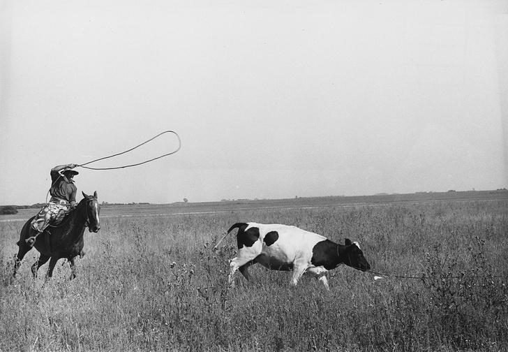 Фото №3 - Детали ковбойской жизни, о которых нам наврали в вестернах