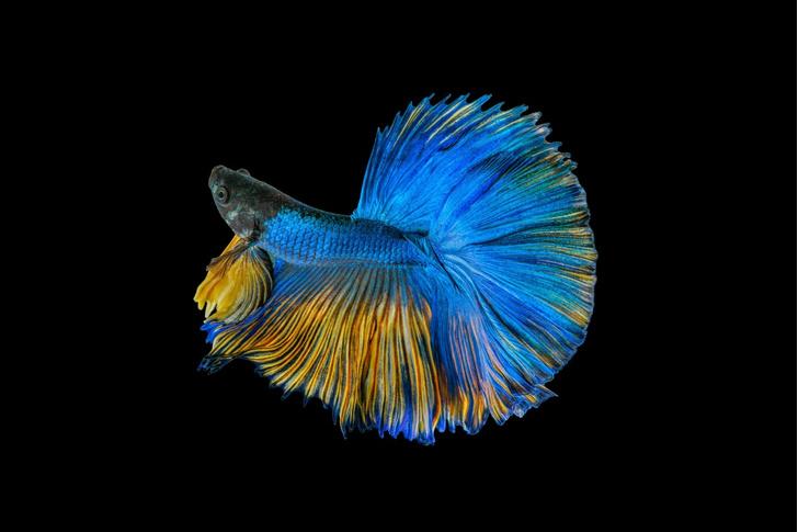 Фото №1 - Рыбий наряд