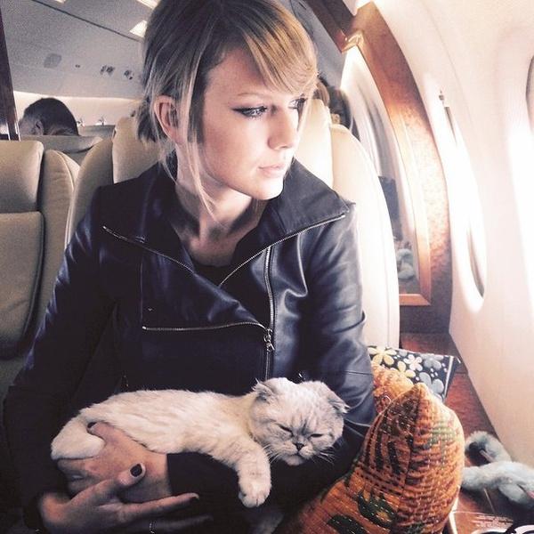 Кошка Тейлор Свифт по кличке Оливия Бенсон