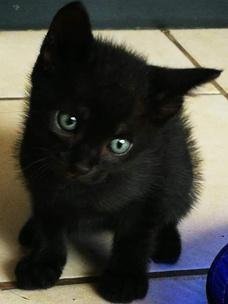 Фото №7 - Тест: Выбери черного котика и получи предсказание от Сабрины Спеллман