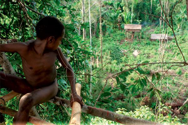 Фото №1 - Высшее общество: индонезийское племя короваи