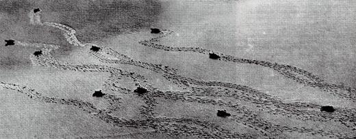 Фото №4 - Загадка черепашьего пляжа