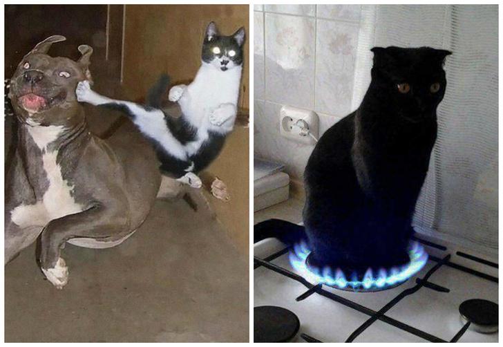 Фото №1 - 20 мемных котов, похожих на известных режиссеров