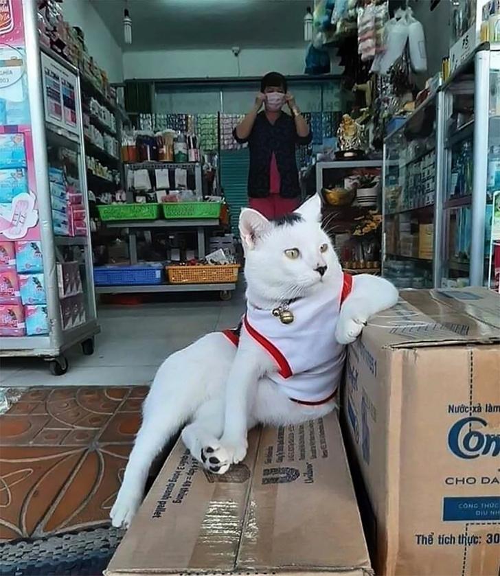 Кот мало того, что невероятно важный, так еще и похож немного на одного немецкого диктатора