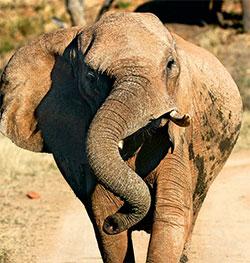 DIOMEDIA<strong>Потому что слонята должны рождаться большими </strong>