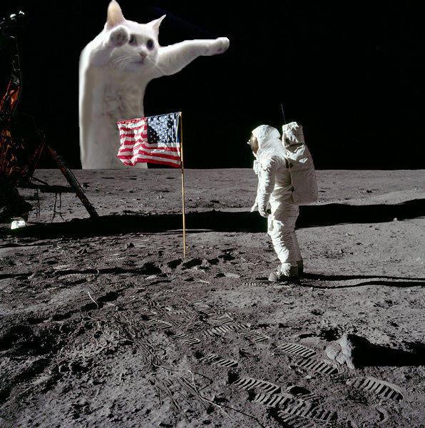 Фото №6 - Умер самый длинный мемокот Интернета Longcat. Каким мы его запомнили в мемах, гифках и видео