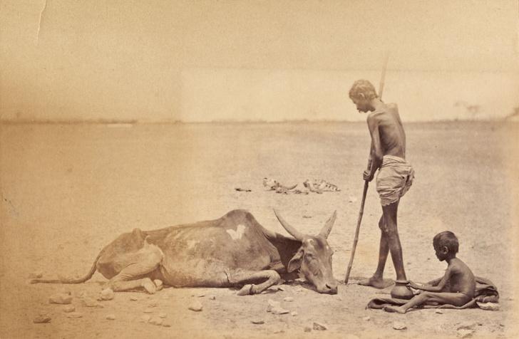 Фото №1 - Мадрасский мор: история Великого голода в Индии 1876–1878 годов в фотографиях