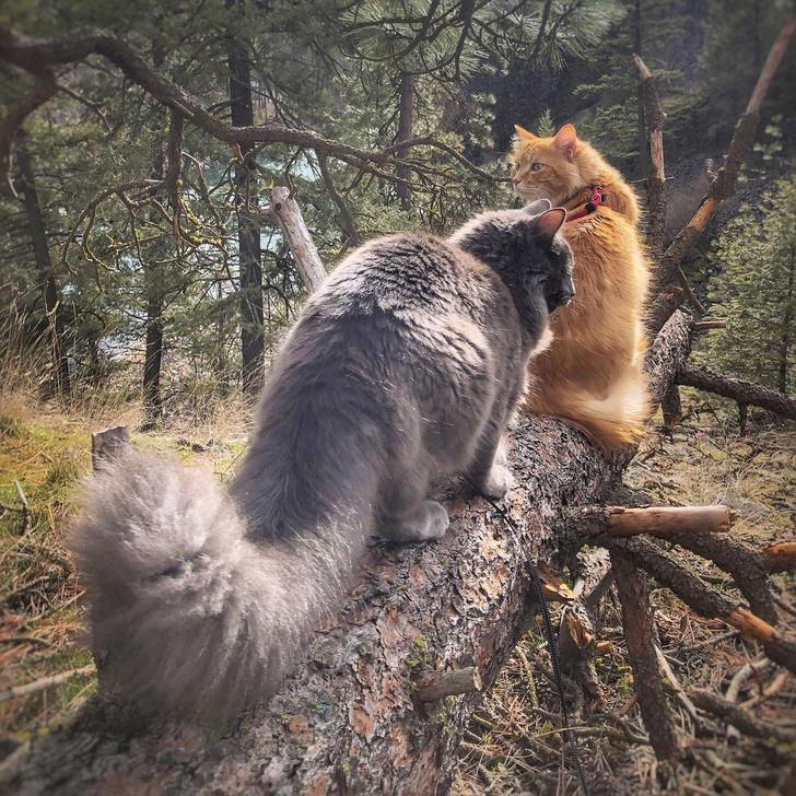 Фото №9 - Замурчательные компаньоны: коты-путешественники