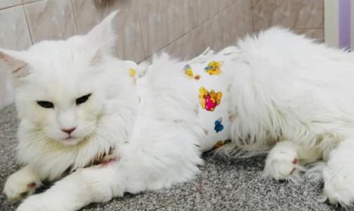 Фото №1 - Ветеринары: «Прилипалы» и «стиратели» - игрушки, способные убить кошку