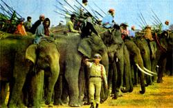 Фото №2 - Кто перетянет слона?