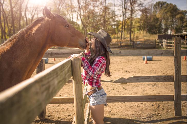 Фото №1 - Ученые оценили степень привязанности лошади к человеку