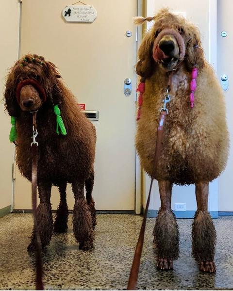 Фото №21 - Если собака без поводка: 15 фото песиков до и после прогулки
