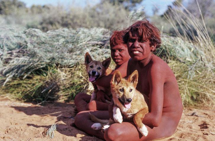 Фото №10 - Собаки с волчьим билетом