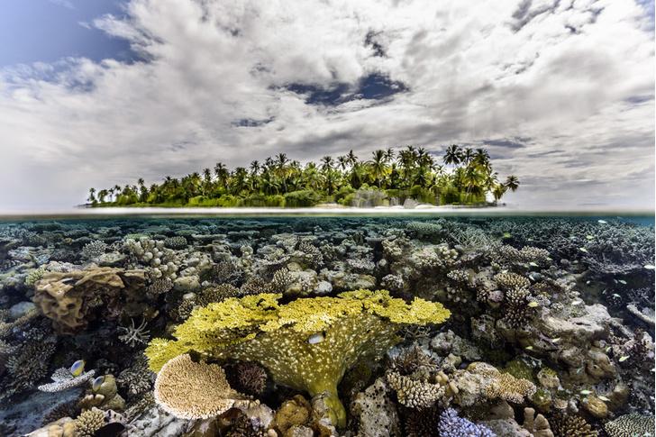 Фото №1 - Национальное достояние: каменные джунгли на Мальдивах