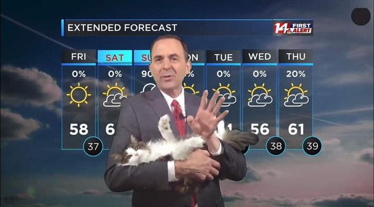 Фото №1 - Ведущий прогноза погоды ведет передачи с кошкой на руках (видео)