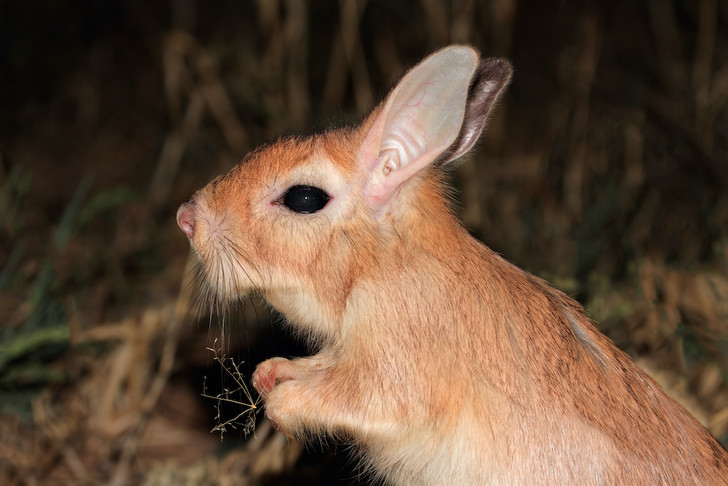 Фото №1 - В Африке нашли светящихся в ультрафиолете грызунов