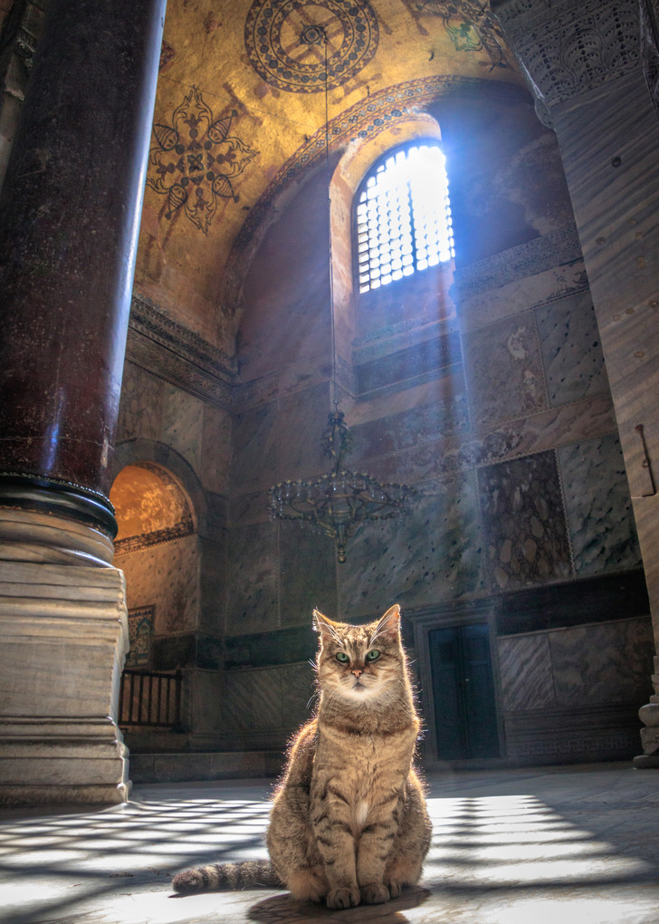Фото №15 - 10 фактов о соборе Святой Софии