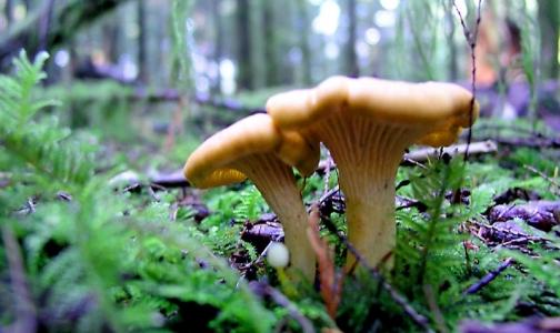 Фото №1 - Как собрать грибы без угрозы для жизни