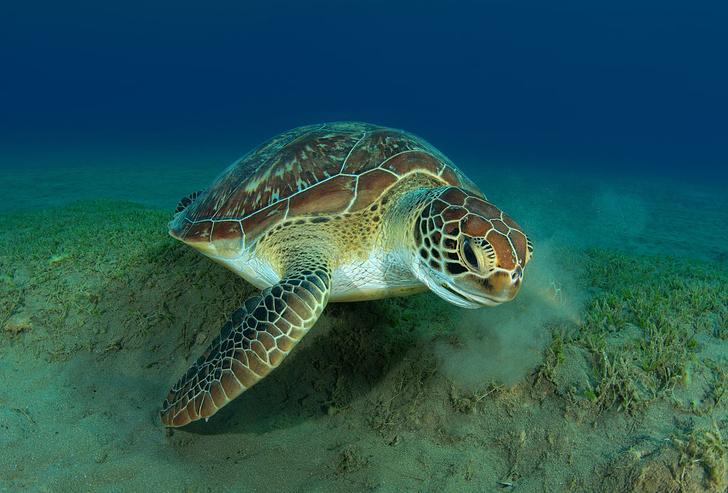 Фото №1 - День черепахи