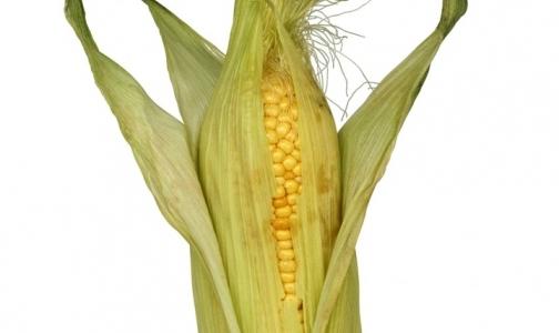 Фото №1 - Роспотребнадзор запретил ввоз генетически модифицированной кукурузы