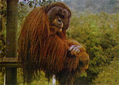 Фото №5 - В лесах Борнео