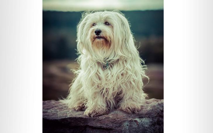 Фото №7 - 9 странных дизайнерских пород собак