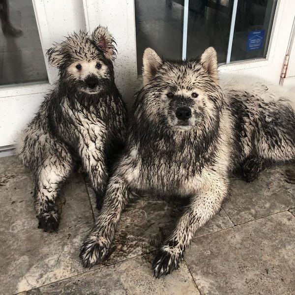 Фото №3 - Если собака без поводка: 15 фото песиков до и после прогулки
