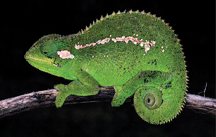 Фото №1 - В Эфиопии найден новый вид животных