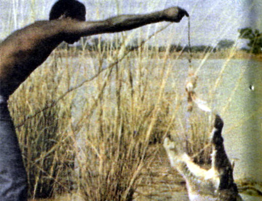 Фото №1 - Крокодил не простит...