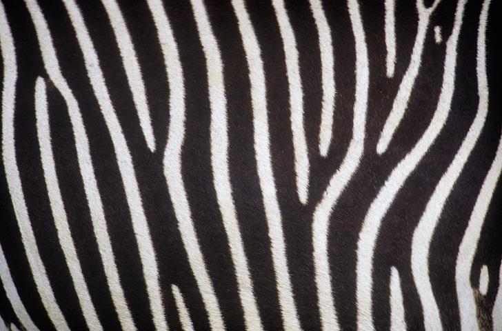 Фото №2 - Только ценный мех: научный взгляд на волосяной покров разных зверей