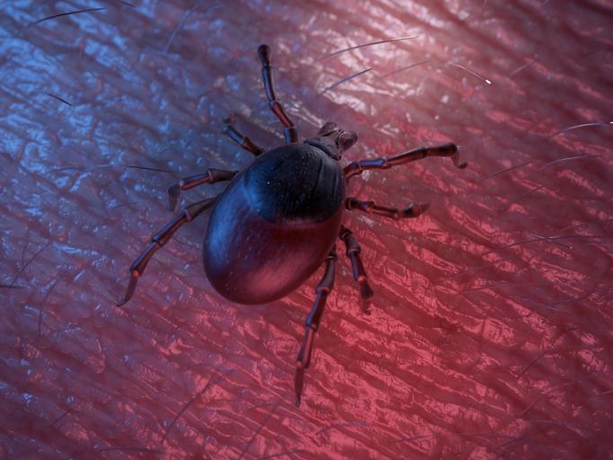 Фото №1 - Роспотребнадзор предупредил о начале сезона активности клещей