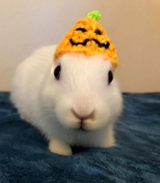 Фото №4 - Хозяйка кролика, который родился без ушей, вяжет ему ушки