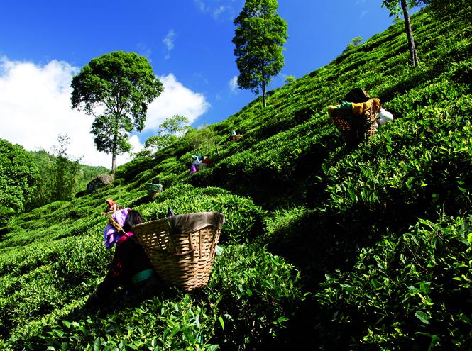 Фото №2 - Счастье для чайников, или Почему чай точно лучше кофе