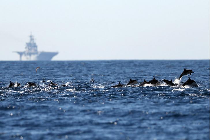 Фото №1 - Боевые дельфины