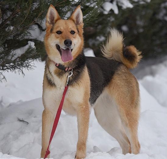 Фото №2 - Котопёс недели: собака Ляля и кот Зидан
