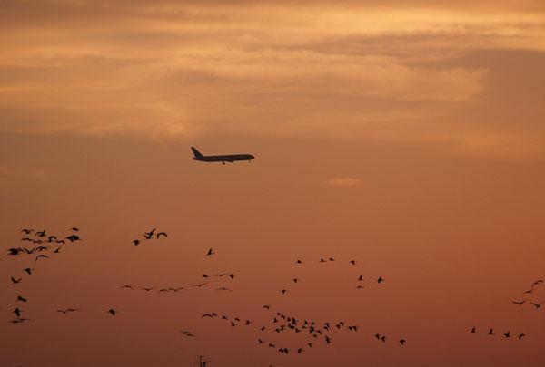 Фото №3 - Птичьи песни с чужого голоса