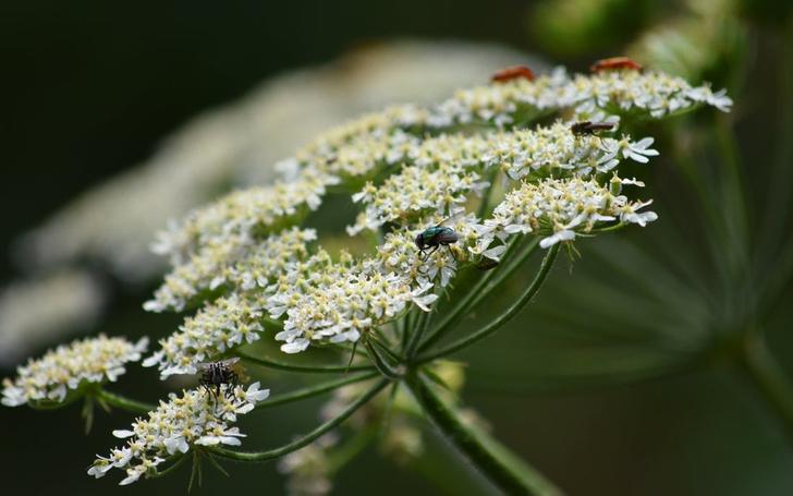 какие растения ядовитые для человека