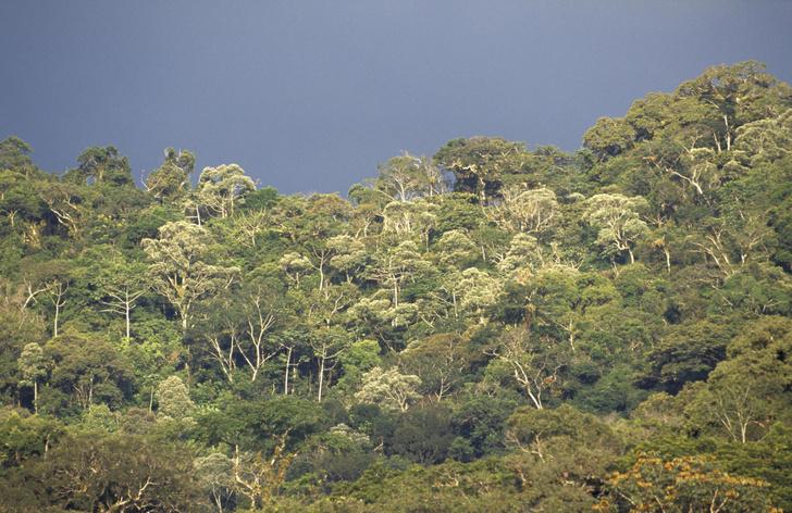 Фото №1 - Скорость исчезновения бразильских лесов признали рекордной за десятилетие