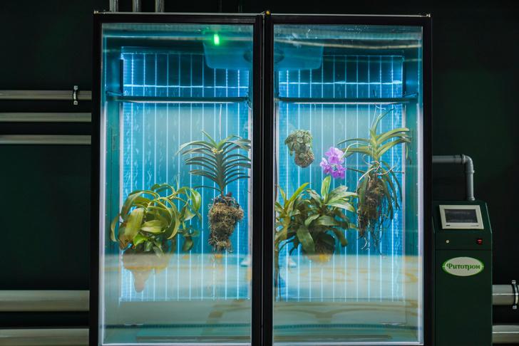 Фото №3 - Инсталляция Марины Звягинцевой «Water линия» в «Зарядье»