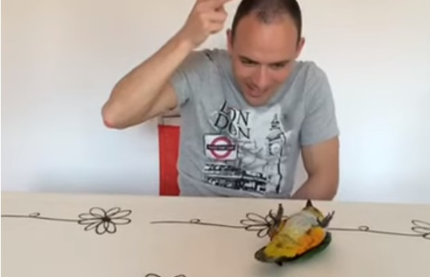 Фото №1 - Попугай виртуозно притворяется мертвым, когда хозяин «стреляет» в него из пальца (видео)