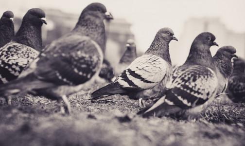 Фото №1 - В России заболели сотрудники птицефабрики птичьим гриппом, до сих пор не передававшимся от человека к человеку