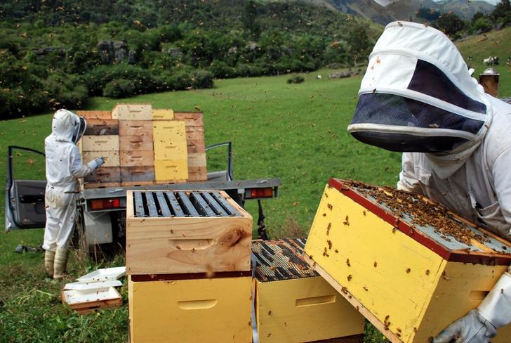Фото №1 - Жизненно важное ж-ж-ж: интересные факты о пользе и важности пчел