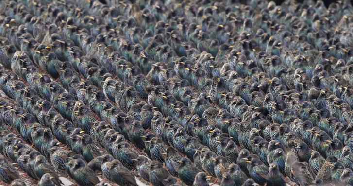 Фото №1 - Птичий парад