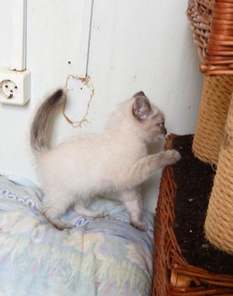 Фото №3 - Котопёс недели: котенок Стиви и собака Ночка