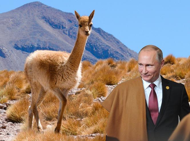 Фото №1 - Золотое руно: цена перуанской накидки Владимира Путина